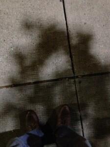Leaf shadows with light grid pattern