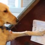 dog presses keypad