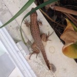 ... complete with wildlife, including this lizard